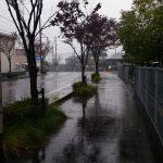 雨の中を歩いたり広島県民だけど家で作るのはモダン焼きだったりな日曜日